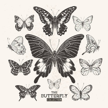 side view: The Butterfly Collection. A collection of hand drawn butterflies, vintage set. Vector illustration.
