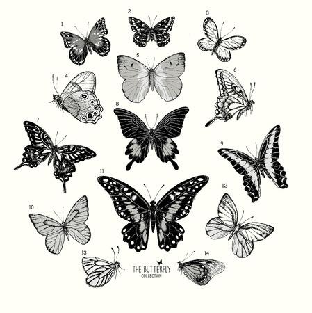papillon dessin: Grande collection de papillons, dessinés à la main illustration isolated.Vector ensemble