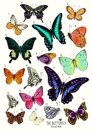 大きな蝶のコレクション手描きは分離設定。ベクトル図  イラスト・ベクター素材