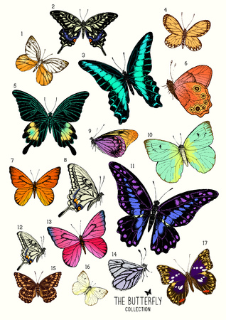 Large Collection of Butterflies, hand drawn set isolated.Vector illustration Иллюстрация