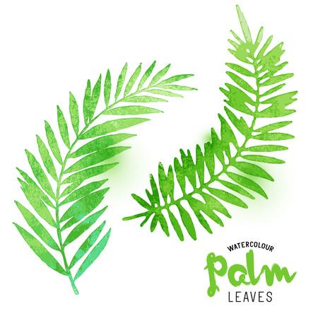 Acquerello foglie di palma. Vector effetto acquerello foglie di palma. Illustrazione vettoriale. Archivio Fotografico - 55683582