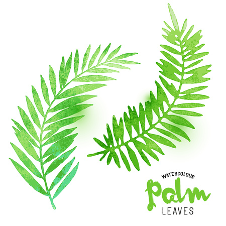 palm wreath: Watercolour Palm Leaves. Vector watercolour effect palm leaves. Vector illustration.