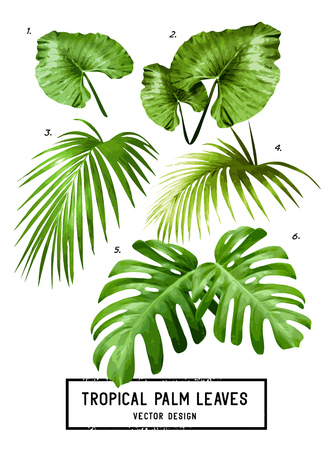 undergrowth: A set of vector isolated tropical jungle green palm leaves. Illustration
