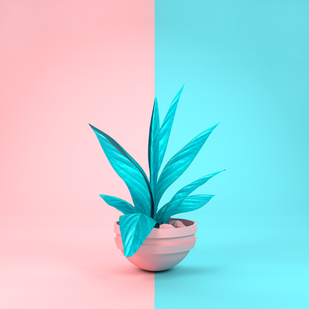 A pastel pink and cyan house plant matching background colours. 3D  illustration. Stock Photo