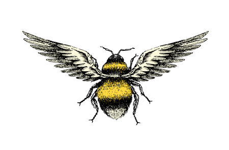 A hand drawing sketch of a fantasy bumblebee insect top view with birds wings.