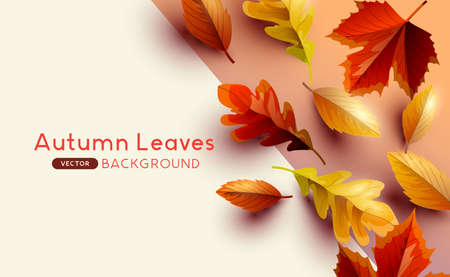 Autumn seasonal background frame with falling autumn leaves and copy space. Vector illustration  イラスト・ベクター素材
