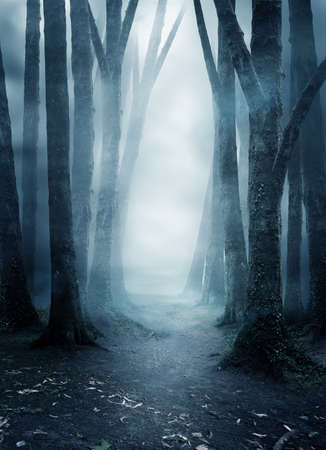A quite and mysterious forest covered in mist with a pathway running through it. Photo composite. 写真素材