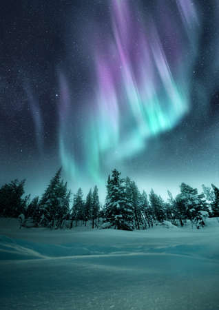 The Aurora Northern Lights flicker in the winter night sky above a forest in Sweden. Photo Composite.
