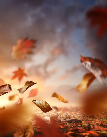 Fall season. Autumn background with the ground covered in leaves and the wind blowing them up into the air.