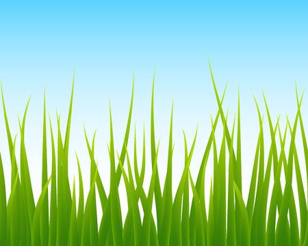 green grass and blue sky: green grass, blue sky seamless background, vector illustration
