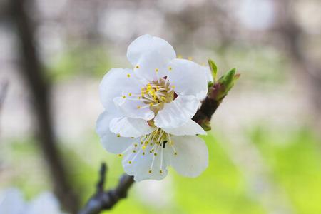 cross procesed: white flower tree spring macro