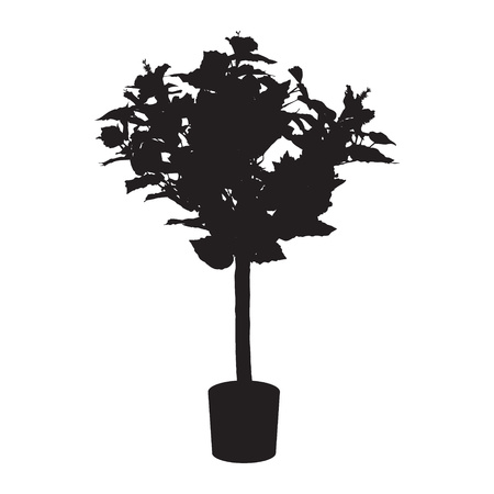 rose tree: Office and house rose tree silhouette. Illustration