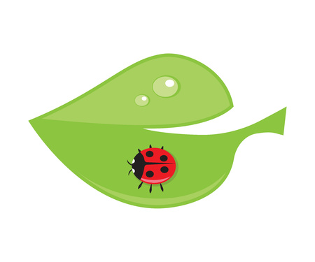ladybird: Green leaf with drops of dew and ladybird.