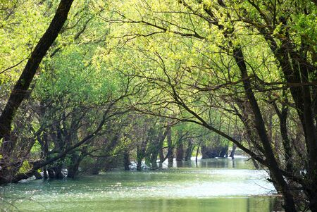 Summer landscape. Green trees against the river photo