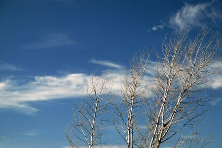 Autumn landscape with trees against the sky Stock Photo - 5666424