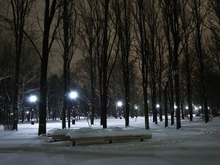 Winter landscape of city park at night photo