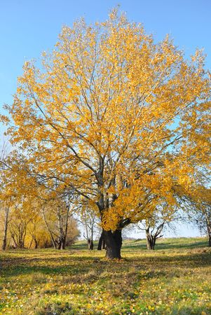 Autumn landscape with trees against the sky photo