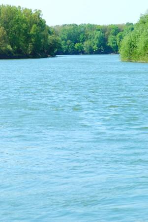 riverside trees: Summer landscape. River, riverside and trees