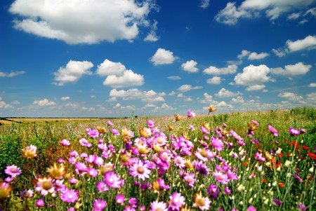 flatland: Summer landscape with field flowers. Focus on horizon. Stock Photo
