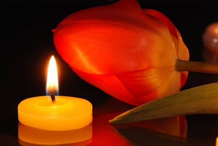 Romantic composition with a tulip and a burning candle