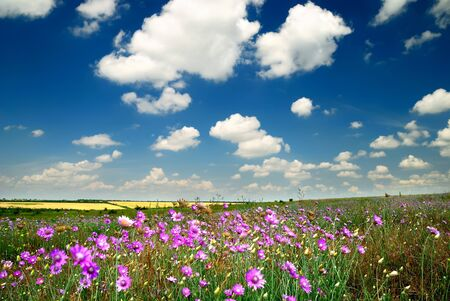 flatland: Summer landscape with the beautiful sky and fields Stock Photo