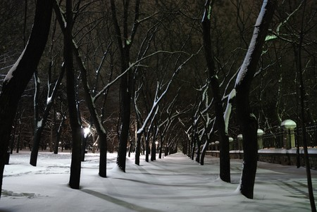 Winter landscape of city park at night photo