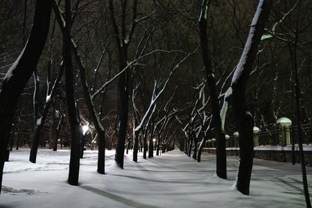 nightscene: Winter landscape of city park at night Stock Photo