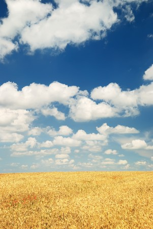 Wheaten field and the dark sky Stock Photo - 7762982