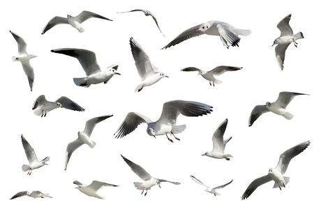 a set of white flying birds isolated. gulls