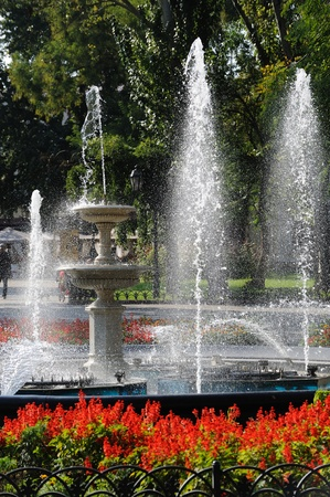 fountain in city park with red flowers photo