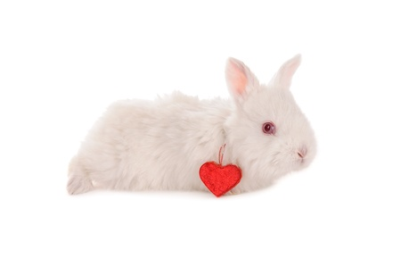 white baby rabbit and heart isolated photo