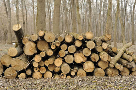sawn: firewood in the forest. sawn wood.