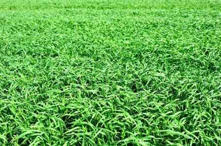 Background from green grass Stock Photo - 13836757
