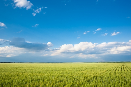 beautiful landscape. field and clouds photo