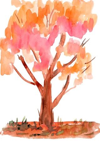 child's drawing watercolor. Isolated autumn tree Stock Photo - 14734893