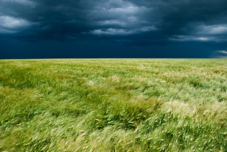wheat field and stormy sky landscape photo