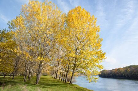 autumn forest, trees, river and sky at day photo