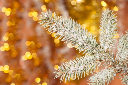 fir tree branch with snow on golden bokeh background photo