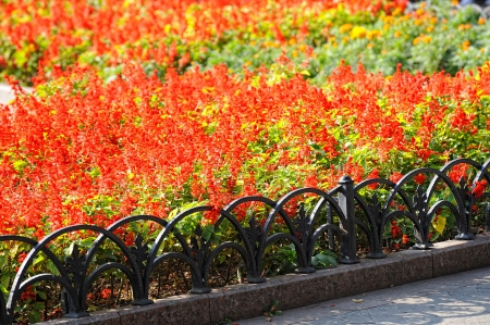 bright red flower bed in the park Stock Photo - 16950058