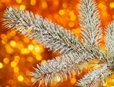 fir tree branch with snow on golden background photo