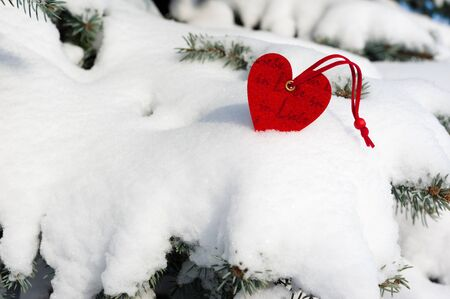 heart at snow on fir tree photo