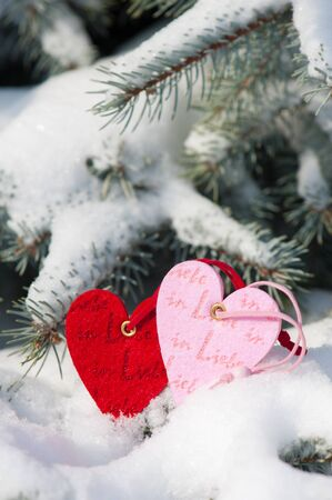 two heart at snow on fir tree photo