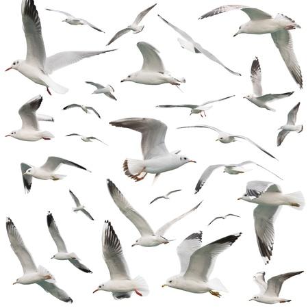 seagull: white birds set. isolated on white Stock Photo
