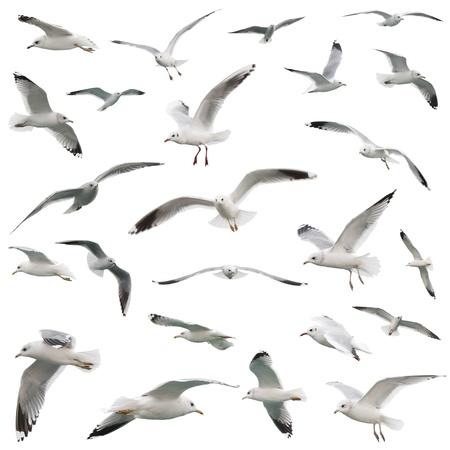 white birds set. isolated on white 스톡 콘텐츠
