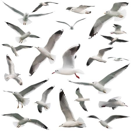 birds set isolated on white Standard-Bild