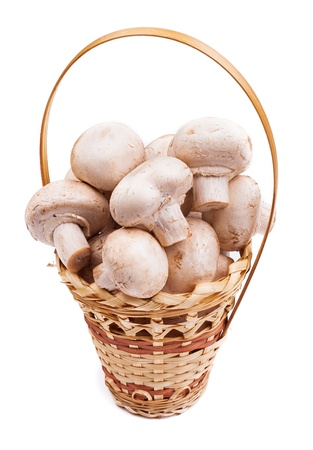 mushrooms in a basket photo