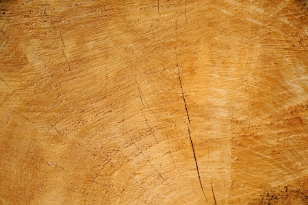 sawn wood texture as background photo