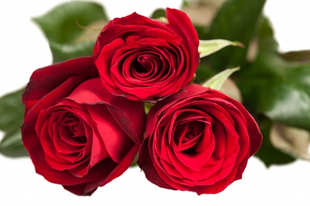 Three red roses isolated on white photo