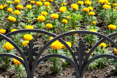 smithery: decorative fence and yellow flower bed