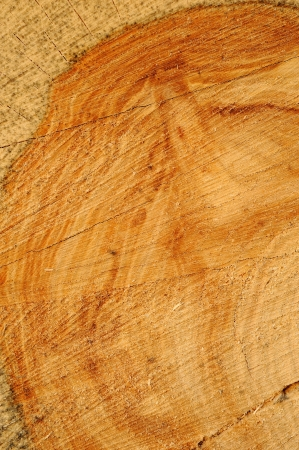 sawn: sawn wood texture as background
